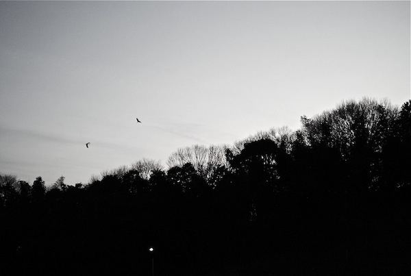 mori noir et blanc
