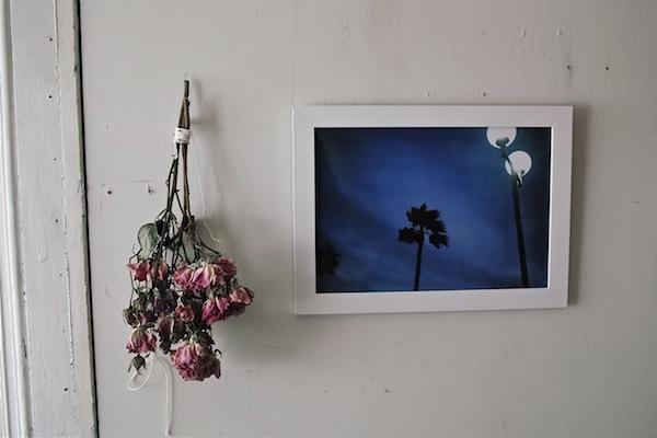 photo et roses