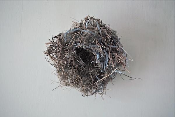 bird's nest1