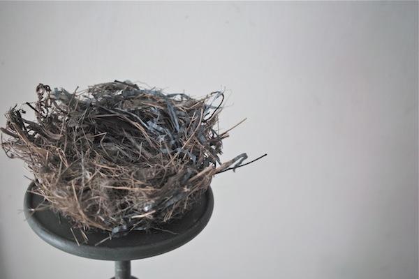 bird's nest2